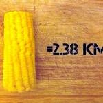epis de maïs cuit