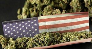 cannabis usa